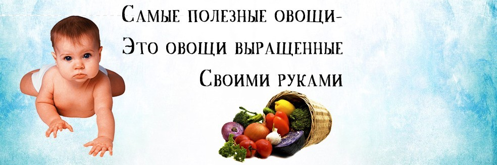 Самые полезные овощи из своей теплицы